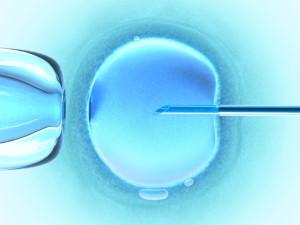 Eggs-for-IVF