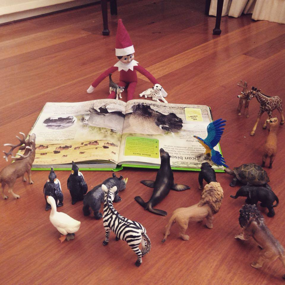 Fast Elf on The Shelf Ideas - Story Time With TOys