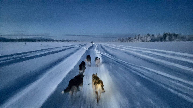 Lapland Christmas Husky Rides