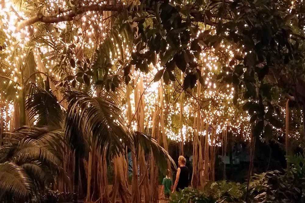 Fairy Garden at Brisbane Botanical Gardens