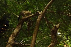 Brisbane City Botanical Gardens For Toddlers - See Possums