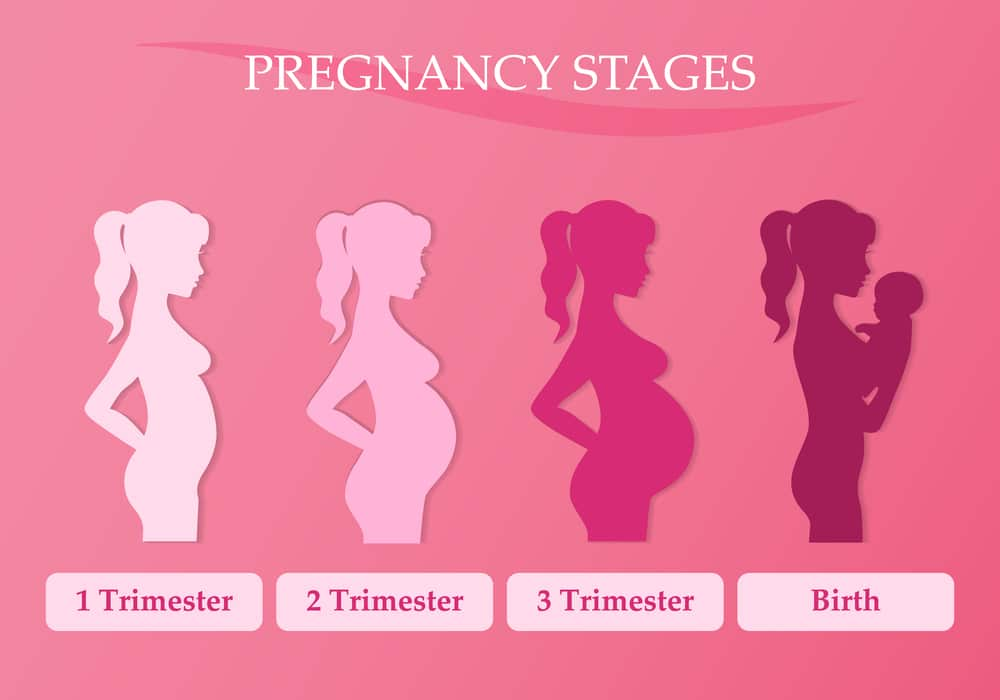 what to expect in the 2nd trimester