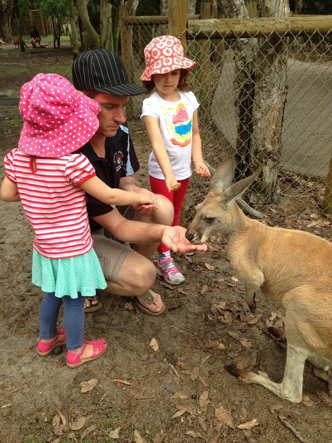 Caversham Wildlife Park feeding kangaroo