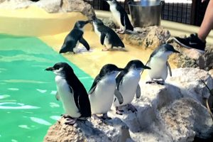 Penguin Island day trip with kids